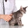Ветеринарные клиники в Преградной